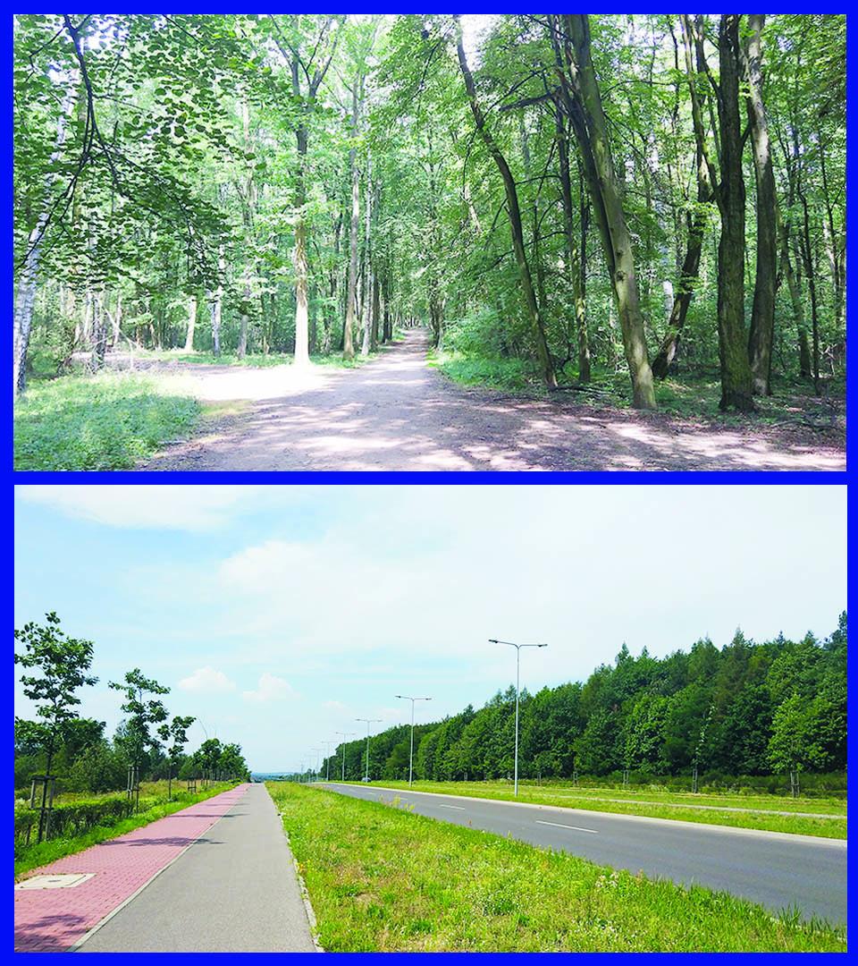 Las Aniołowski i Aleja Marszałkowska, Częstochowa; Foto: Katarzyna Frątczak
